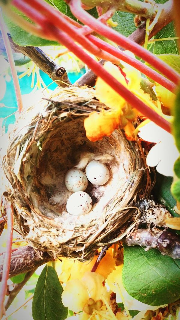Birdeggs Nest Kiwifruit Vine Beauty In Nature High Angle View Directly Above The Culture Of The Holidays