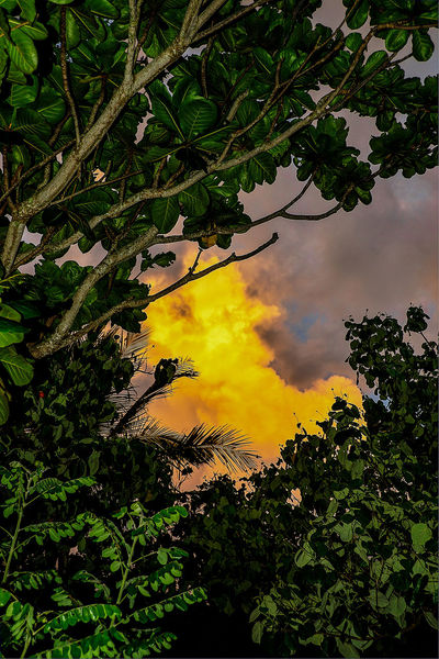 Among The Trees Color Jungle Landscape_Collection Landscape_photography Nature Photography Sunset #sun #clouds #skylovers #sky #nature #beautifulinnature #naturalbeauty Photography Landscape [ Sunset And Clouds