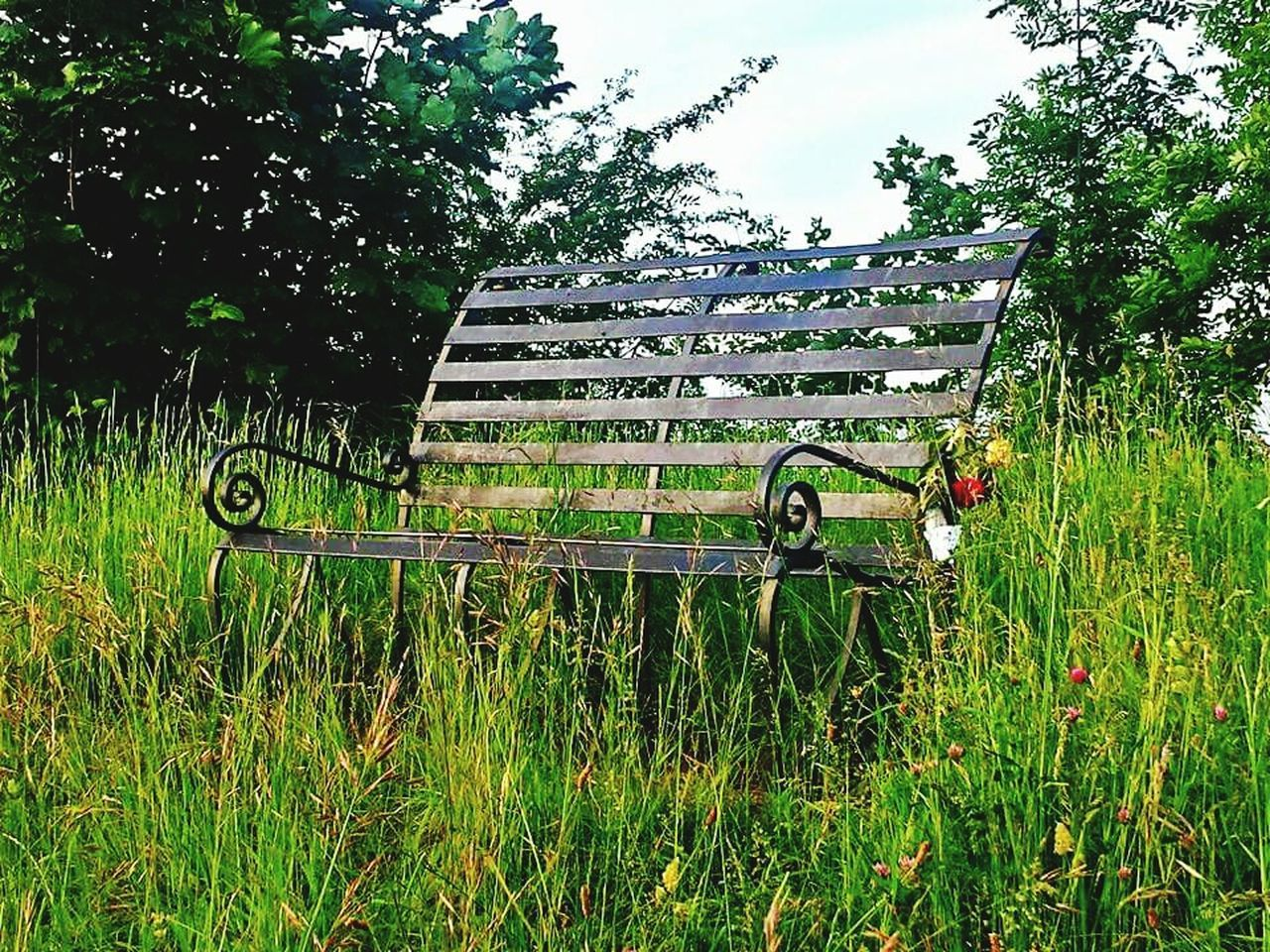 Bench Life Lonely Bench Lonelyplanet World's Loneliest Bench Gloucestershire UK Overgrown And Beautiful