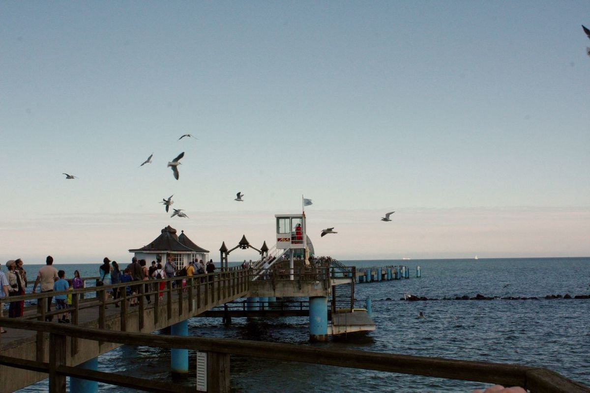 Animal Themes Animal Wildlife Animals In The Wild Bird Chaos And Order Day Flock Of Birds Flying Flying Birds Horizon Over Water Large Group Of Animals Large Group Of People Outdoors Peer Rügen Sea Seabridge Seebrücke Sellin Sellin Sky Spread Wings Swarm Of Birds Water