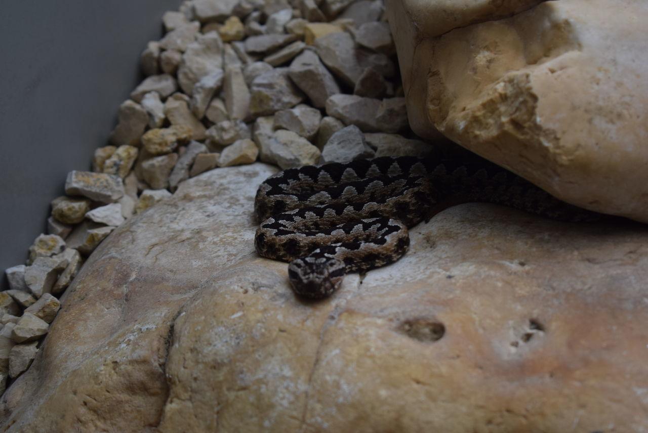 tiny snake Brown Day Grey Indoors  No People Schlange  Snake Steine Stone Stuttgart Wilhelma