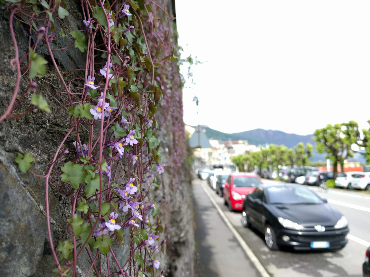Beauty In Nature Blue Clear Sky Day Diminishing Perspective Flower Focus On Foreground Growth Land Vehicle Landscape Mode Of Transport Mountain Nature No People Outdoors Parked Parking Plant Road Sky Stationary The Way Forward