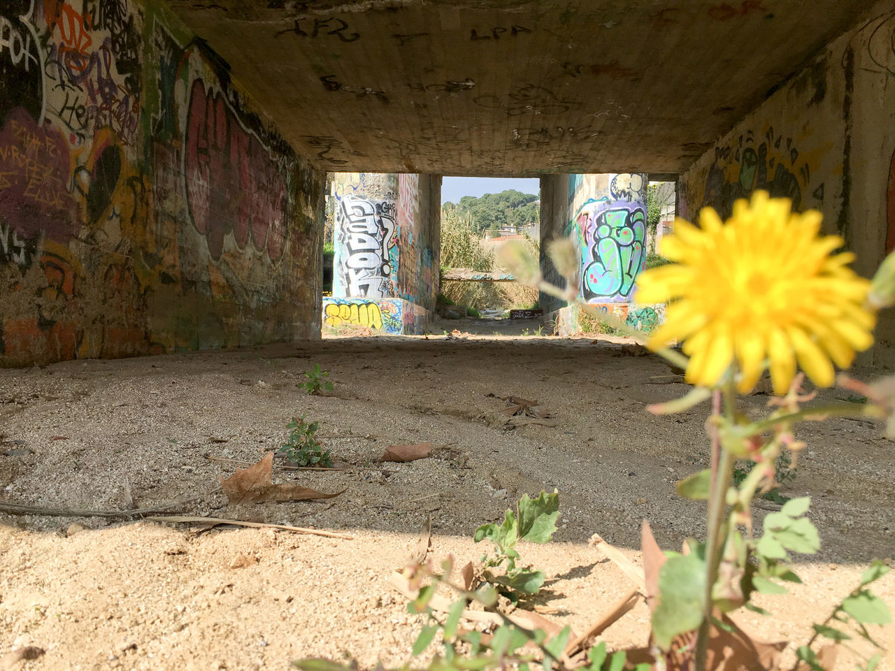 Abandoned Apartment Buildings Architecture Beach Bridge Built Structure Dandelion Drain Drainage Dry Bridge Flower Graffiti Light And Shadow Perspective Sunny