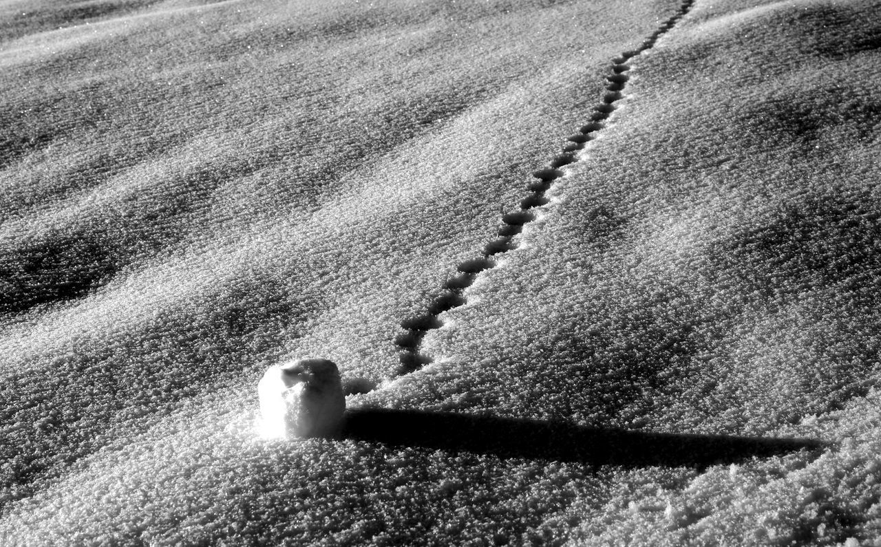 Composition with a little snowball in the fading sunlight Abstract Black And White Photography Close-up Composition Day Fading Light Fine Art Photography Long Shadow Low Key Minimalism Minimalistic Nature No People Olympus OM-D E-M1 Mark II Outdoors Reduction Rolling Down The Hill Snow Snowball Still Life Photography Sunlight Textures And Surfaces Traces Traces In The Snow Winterwonderland