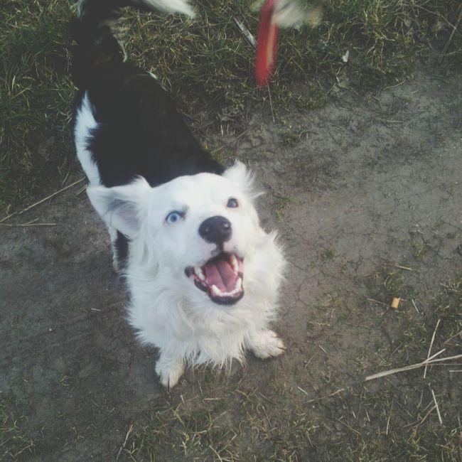 Dylan Dog My Pets :) Polishdog Happy