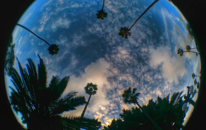 Eyefish Palm Trees Clouds And Sky Smartphone