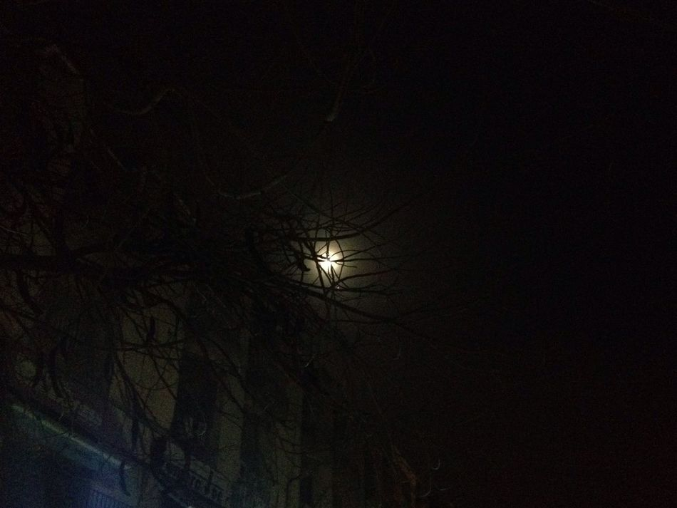 Night Through The Branches No People Bare Tree Beauty In Nature Full Moon