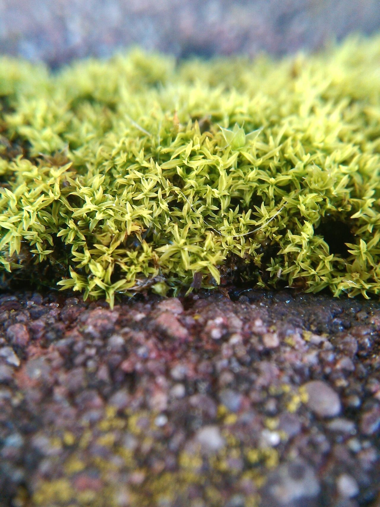 Moss Moss In Macro Moss Close Up Mossy Rock Mossy Stone Moss-covered Macro Macro Nature Macro_flower Macro Photography Macro World Macroshot Macro Flowers Macro Natur Plant Plants Green Macro Garden Macro Plants Macro Plant Stone Stone Texture Stone Structure Stone Surface Nature Harmony