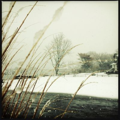 snow at East Quogue by Constance Terry