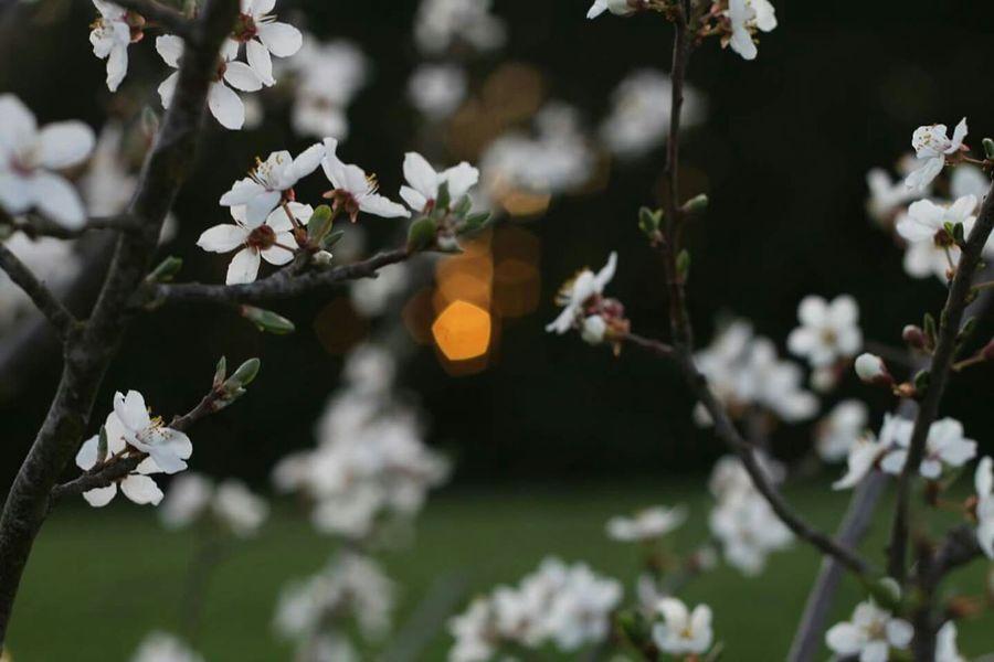 Sunset Flower Shine Through Blury Bokeh Idyllic Forest In The Morning