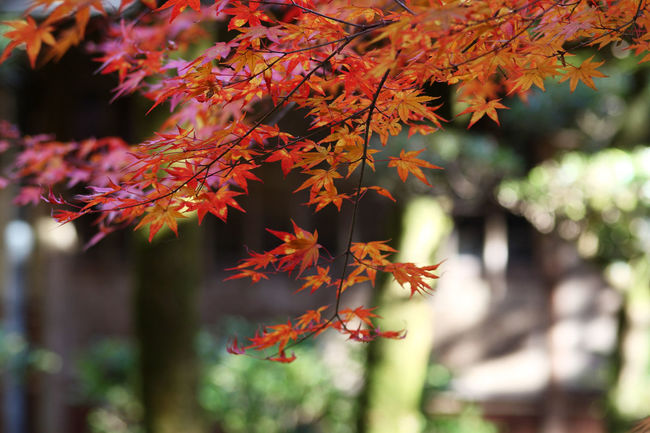 EyeEm Nature Lover Nature From My Point Of View 日本の秋はいいだろう EyeEm Autumn Light And Shadow Fall Beauty フィルターかけると迷うからスッピン EyeEm Best Shots Japan Nature_collection え、何個までタグつけできんの EyeEm Best Edits Nature On Your Doorstep Walking Around Autumn Colors My Best Photo 2015 Ultimate Japan