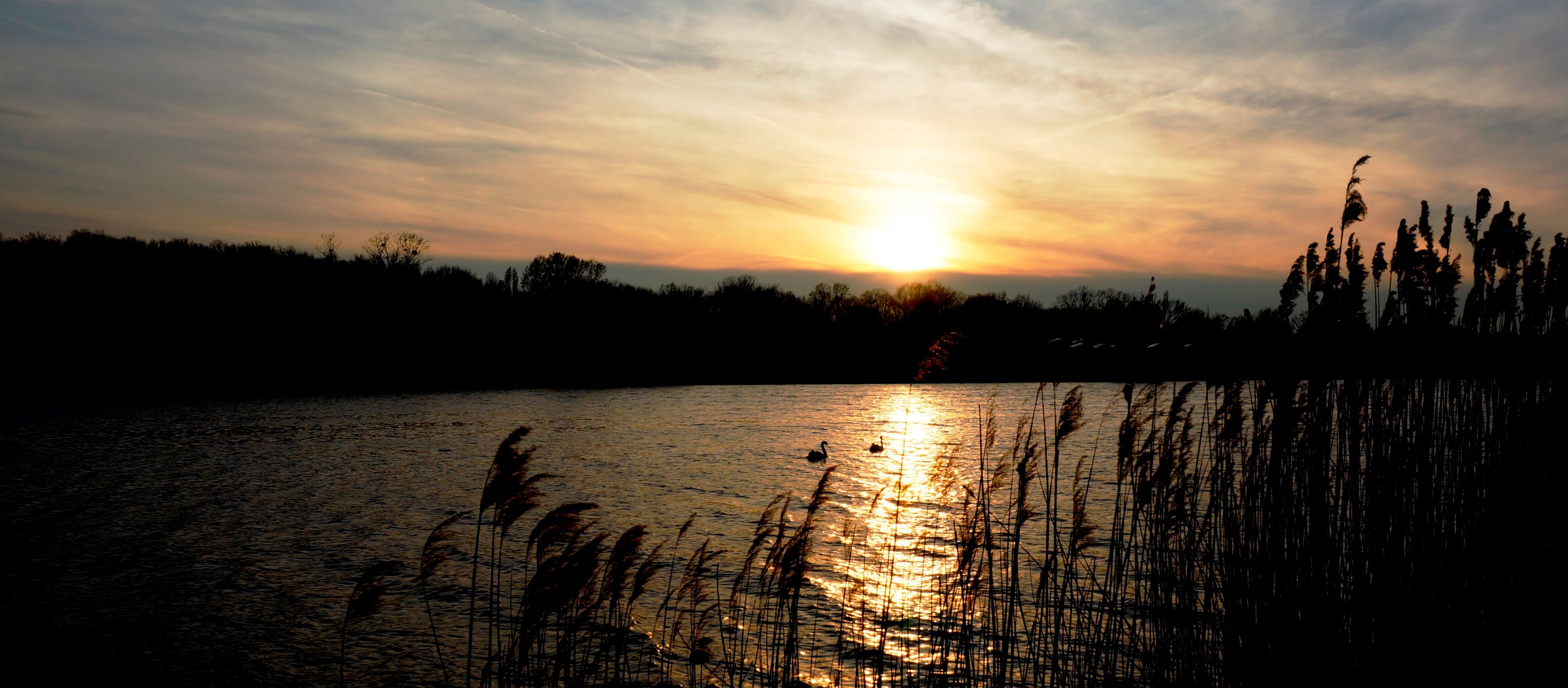 sunset, sun, silhouette, tranquil scene, tranquility, water, scenics, sky, beauty in nature, reflection, lake, nature, idyllic, orange color, plant, sunlight, tree, cloud - sky, outdoors, growth
