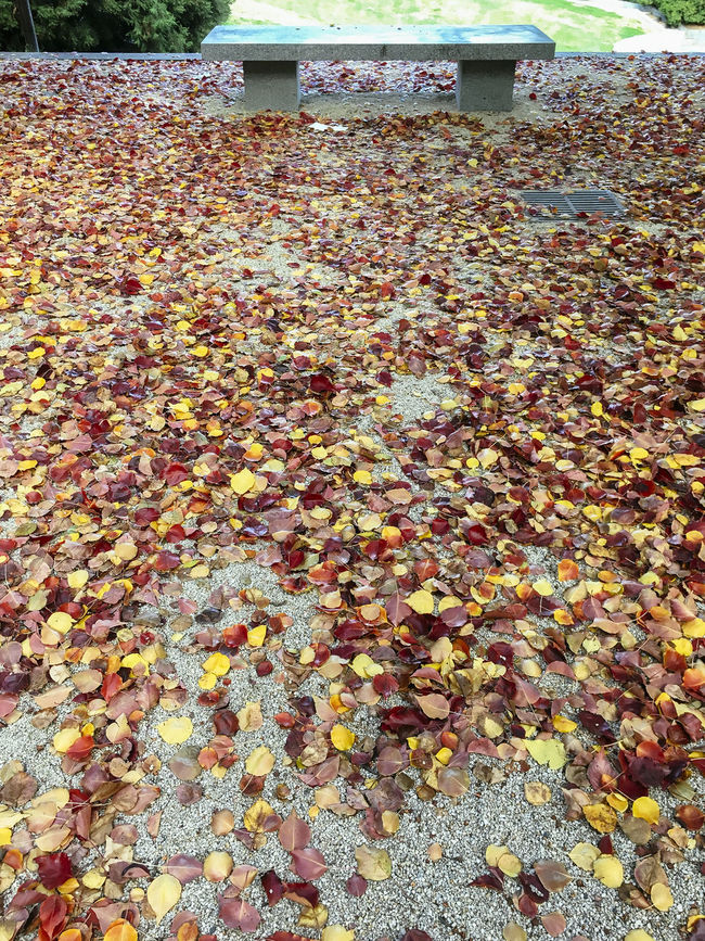 Manchurian Pear trees in autumn Abundance Autumn Beauty In Nature Bench Change Day Growth Large Group Of Objects Leaf Leaves Nature No People Outdoors Season  Tranquility