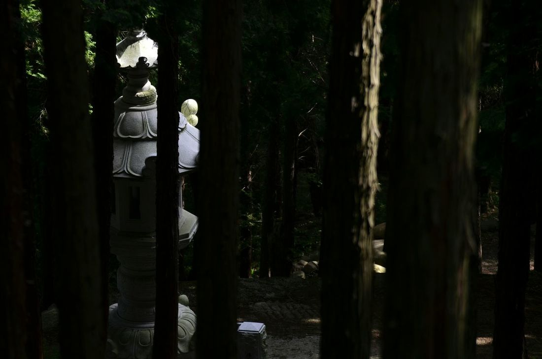 Traditional Nature Trees The Dark Forest Travelling Travel Photography Korea