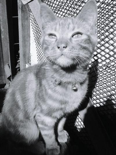 Cascabel Pets Cats Beautiful Beautycats