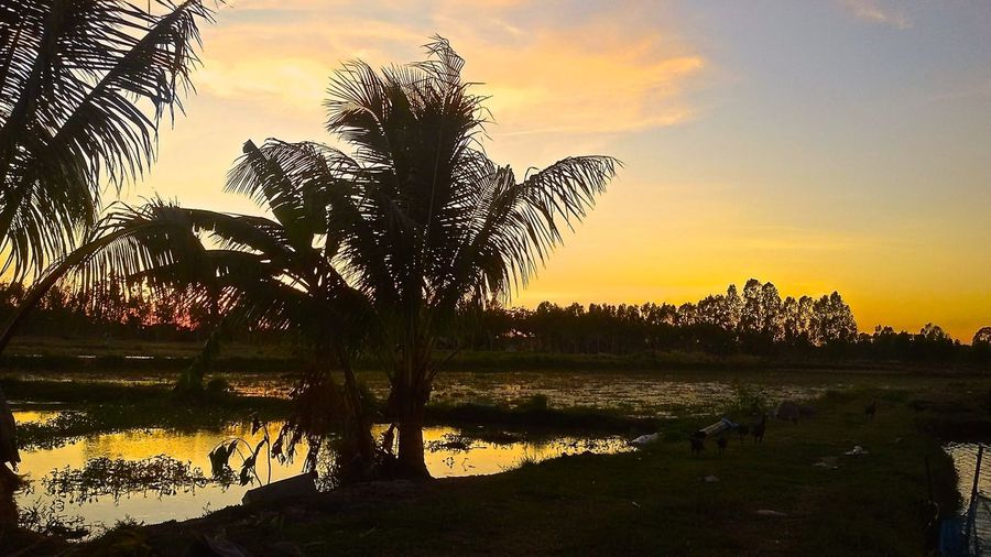 Beauty In Nature Cloud - Sky Dramatic Sky Growth Idyllic Lake Majestic Moody Sky Nature Non-urban Scene Orange Color Outdoors Reflection Scenics Sunset Surin Province Surin Thailand Thailand Tranquil Scene Tranquility Tree Tree Trunk Water