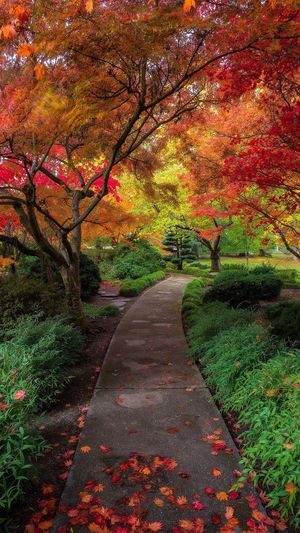 Autumn Leaf Change Tree Nature Scenics Beauty In Nature Tranquil Scene Tranquility The Way Forward Landscape Outdoors Footpath No People Multi Colored Branch Travel Destinations Red Day Single Lane Road EyeEm Best Shots - Nature Beautiful Autumn🍁🍁🍁 Landscape_Collection Amazing