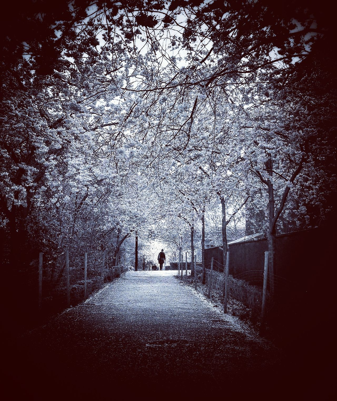 """""""Monday,...a long way to go. Sky Outdoors Tree Real People Night Nature City Life Nature London Walking Monochrome_Monday Monochrome Photograhy Shootermag_uk"""