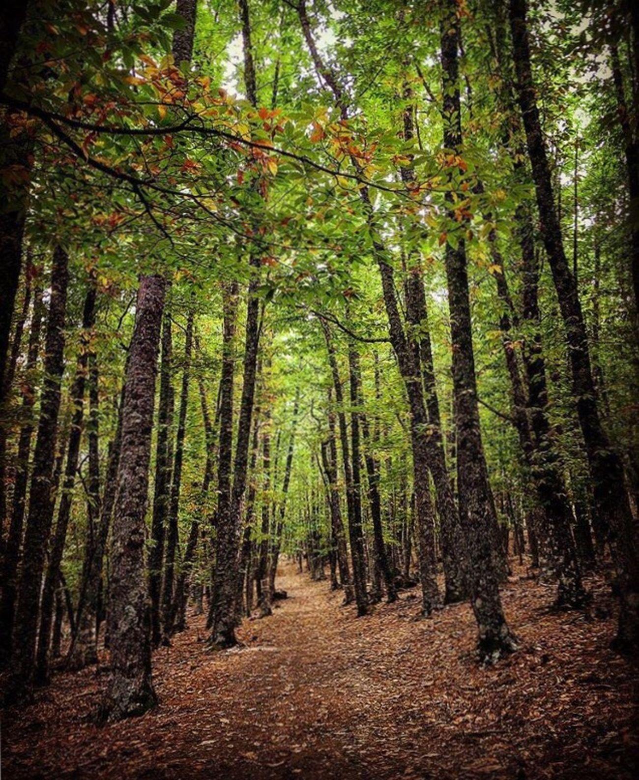 Detodounpoco Paraíso Bosquemagico