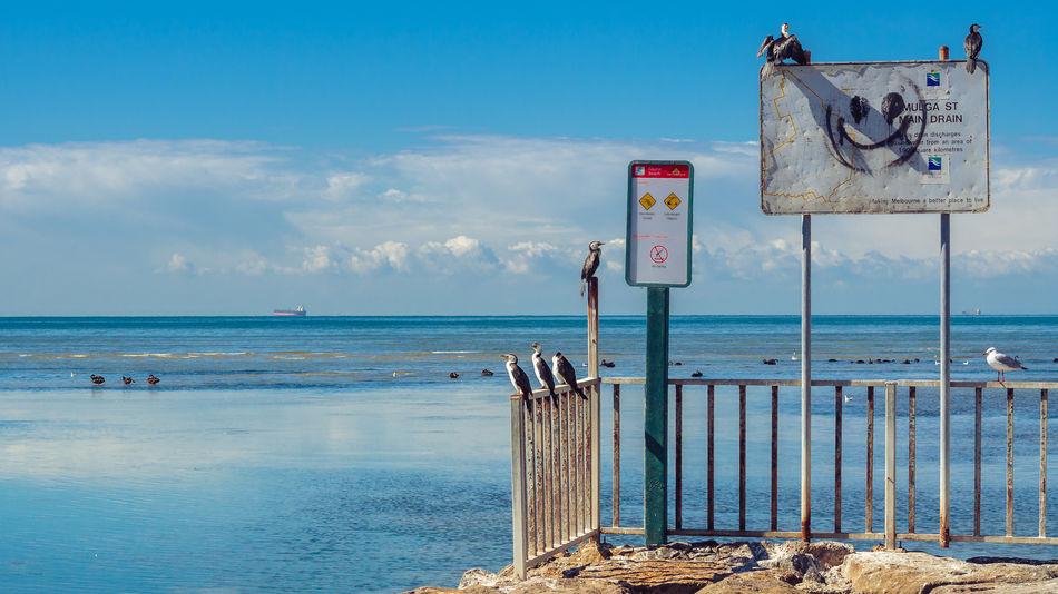 Altona, VIC Beach Blue Cloud - Sky Coastline Cormorant  Day Horizon Over Water Information Sign No People Outdoors Pier Sea Seagull Shore Sky Tranquility The Great Outdoors - 2016 EyeEm Awards
