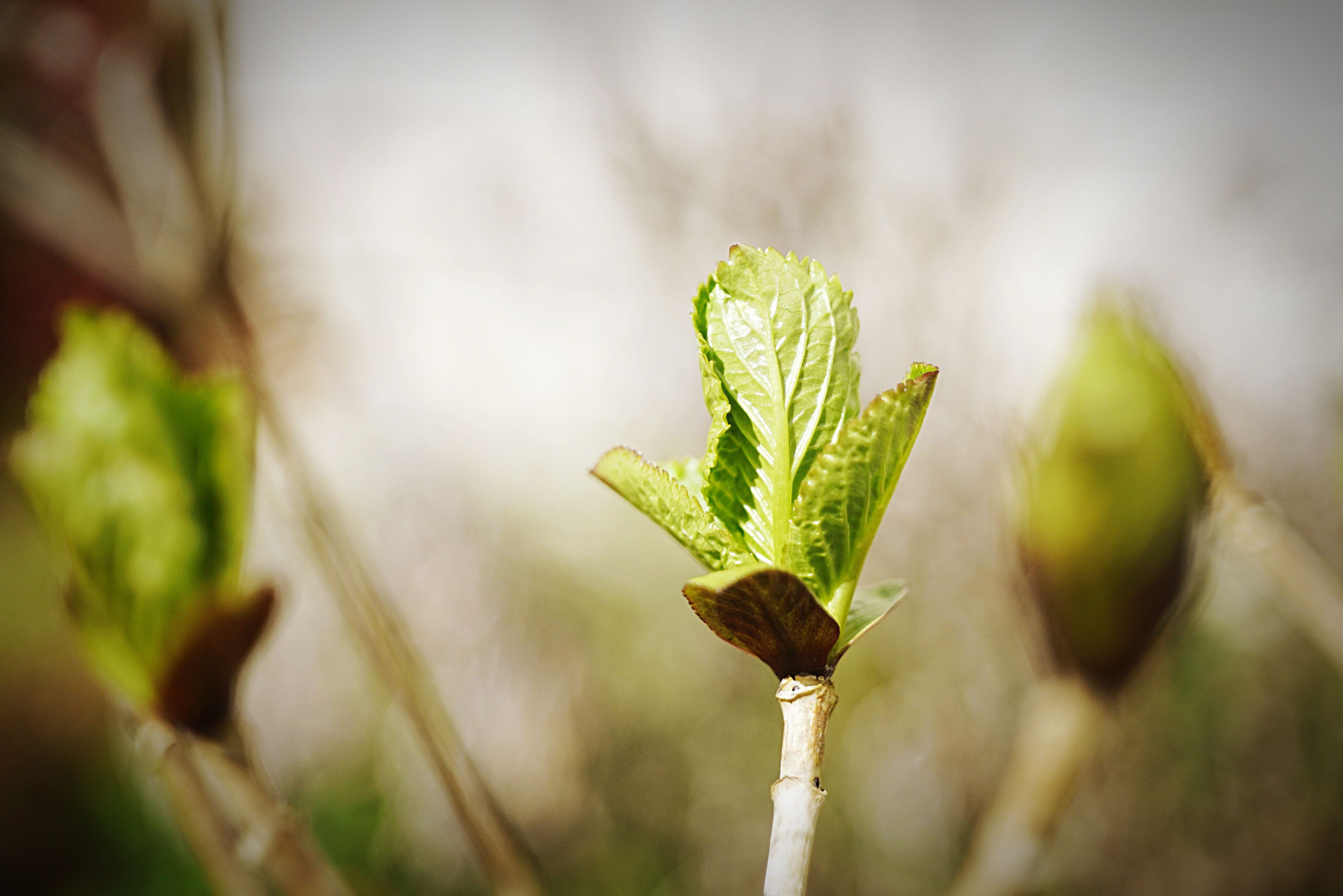 leaf, focus on foreground, close-up, growth, plant, green color, nature, stem, selective focus, growing, beginnings, twig, new life, bud, beauty in nature, outdoors, day, tranquility, freshness, no people