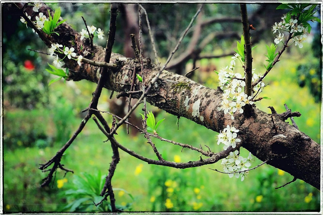 branch, tree, focus on foreground, day, one animal, no people, animals in the wild, outdoors, animal themes, green color, animal wildlife, tree trunk, close-up, nature, reptile, mammal, dead tree, leopard