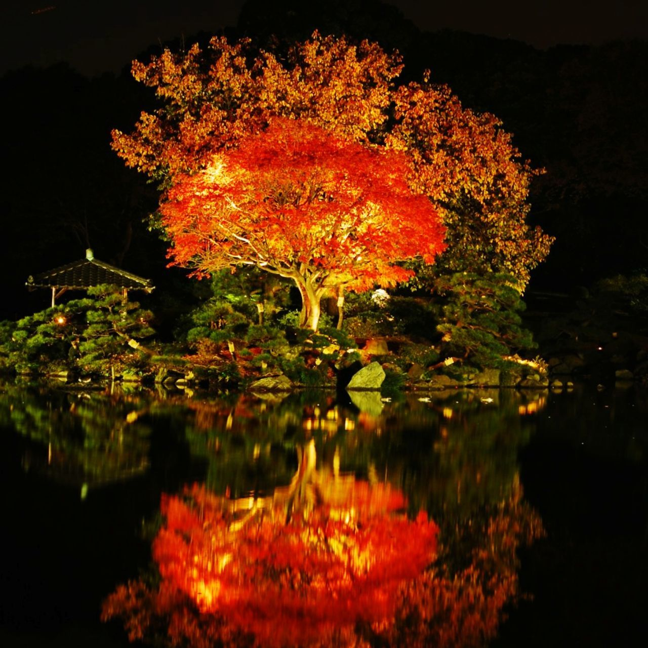 tree, night, reflection, orange color, autumn, water, waterfront, leaf, nature, illuminated, change, outdoors, no people, lake, beauty in nature, growth, sky, close-up, maple