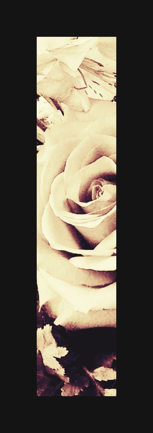 Maggie_Noir Black Magic Flower Porn