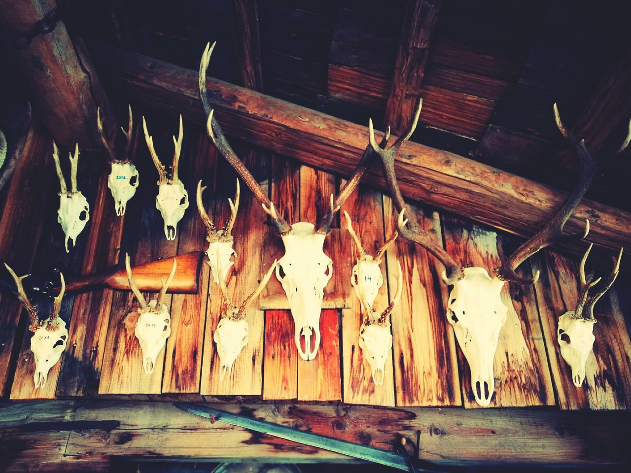 Indoors  No People Art EyeEmNewHere Large Group Of Objects In A Row Nature Animal Head  Trophy Deer Trophy Wood Chalet Chase Antlers On Wall Antler