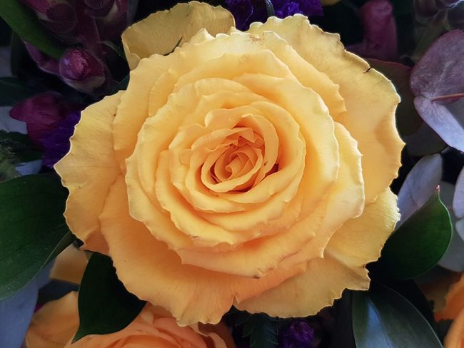 Yellow Roses Check This Out South Africa From Where I Stand God's Glory On Display  Roses_collection Beautiful Design Open Your Eyes See God's Glory On Display
