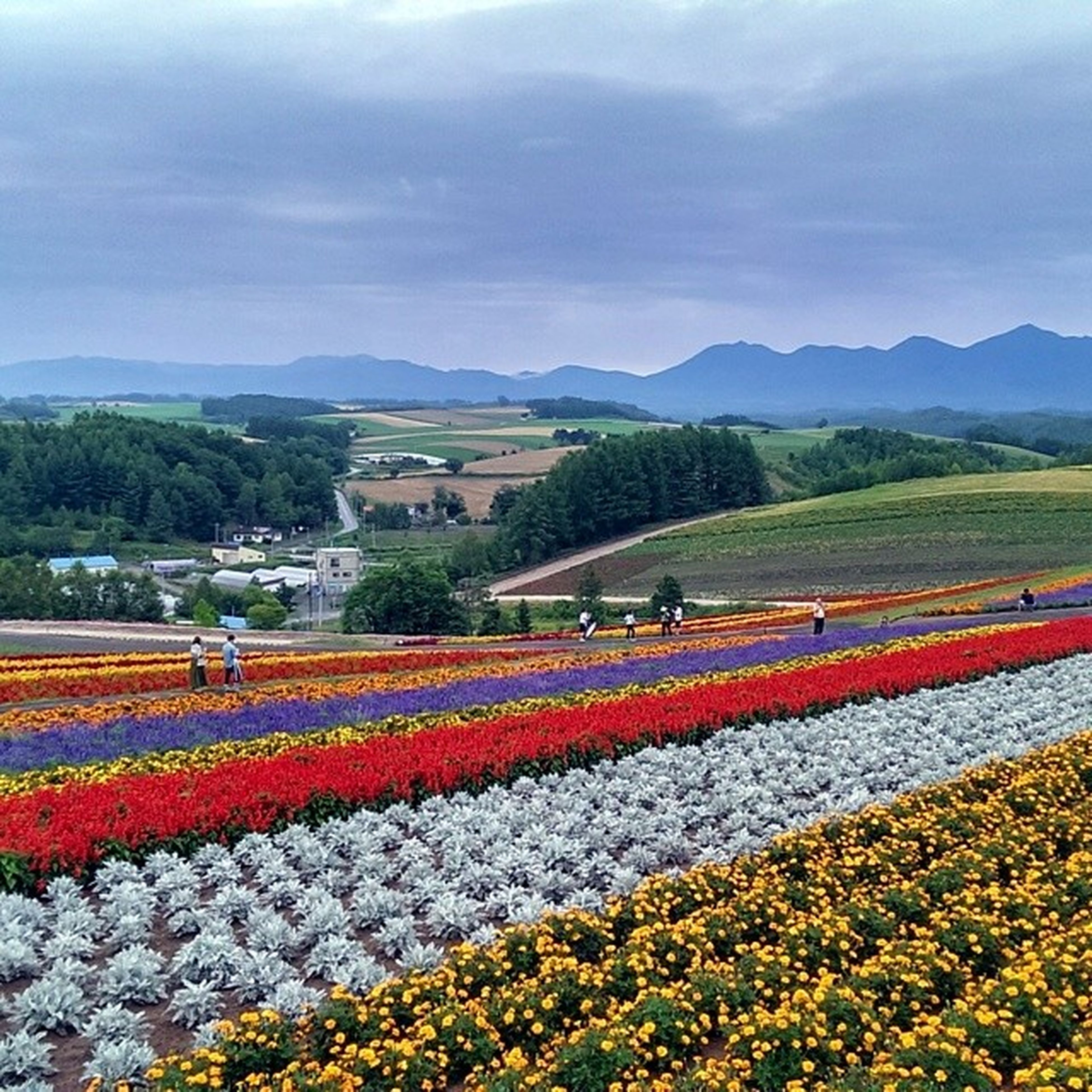 flower, sky, mountain, beauty in nature, landscape, growth, field, cloud - sky, nature, tranquil scene, scenics, agriculture, mountain range, tranquility, rural scene, freshness, cloud, flowerbed, plant, red
