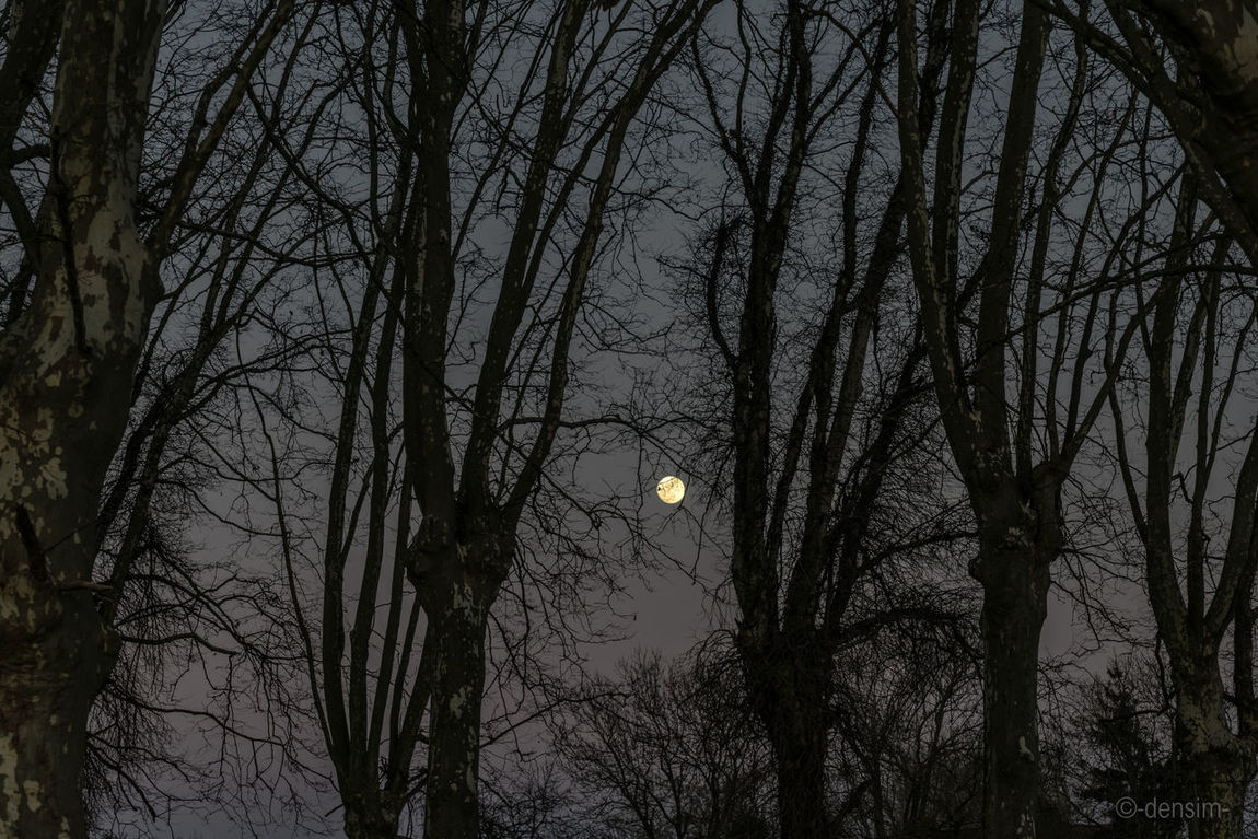 La lune dans les arbres Arbre Arbres Bare Tree Branch Branches Light Lune Moon Outdoors Soir Tree Trunk Trees