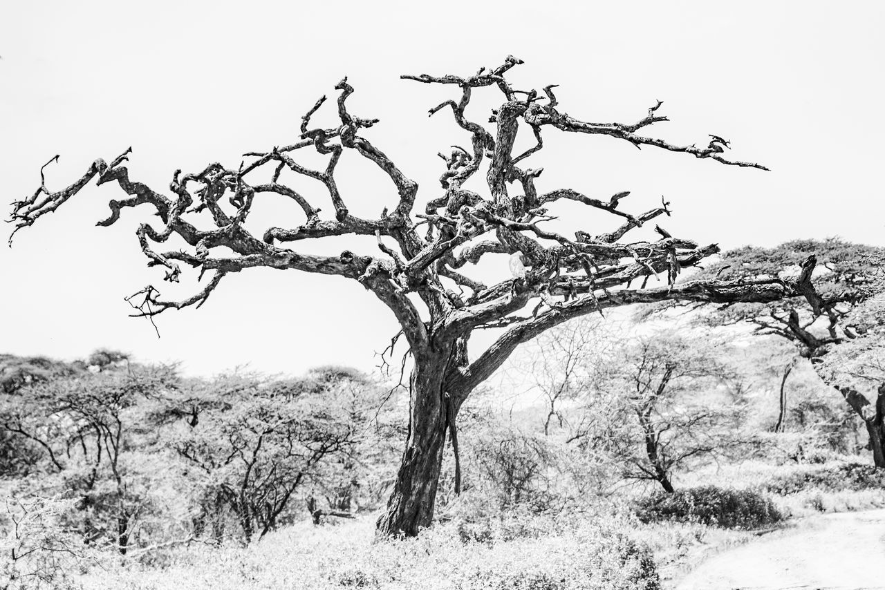 Africa African Beauty Beauty In Nature Black And White Bleak Branch Clear Sky Day Landscape Nature Ngorongoro Crater No People Outdoors Safari Serengeti Serengeti National Park Sky Tanzania Tree