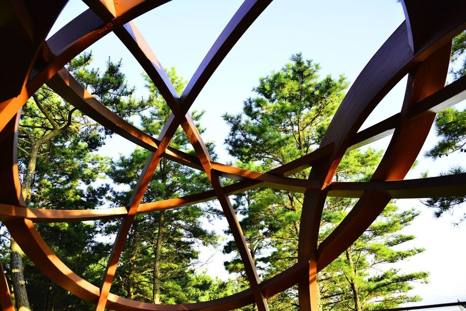 International Garden Exposition Suncheon Beauty In Nature Close-up Cloud Garden Garden Architecture Garden Photography Korea Garden Low Angle View Nature Sky Tree