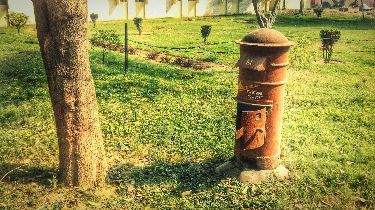 Green Green Green!  EyeEm Best Shots - NatureFlowers,Plants & Garden Into The Woods Letter_postbox ... Postbox Eyem Nature Lover Eye4photography EyeEm Best Shots Hugging A Tree