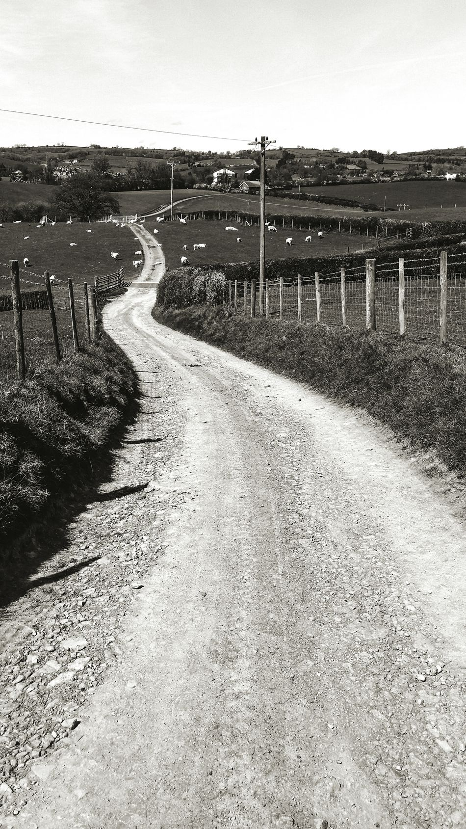A White Road ... Outdoors Nature Sky Country Road Farmland Black And White Fields Sheep Wales Newtown Powys Landscape Monochrome Contrasts Way Forward Hills Road Less Traveled Countryside Agriculture Farm Walking Britain Inviting Road Meandering
