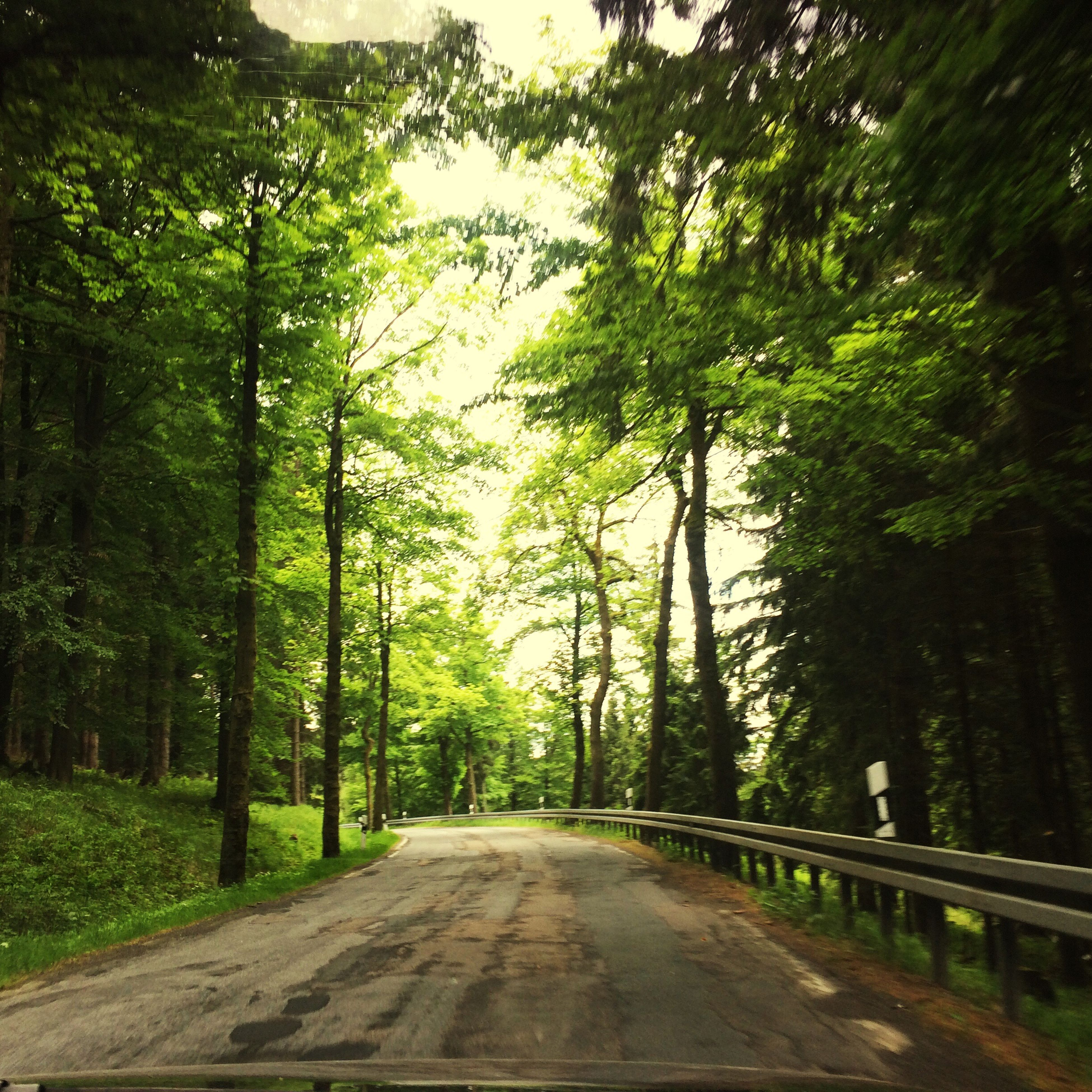 tree, the way forward, diminishing perspective, transportation, road, vanishing point, tranquility, growth, green color, forest, nature, tranquil scene, beauty in nature, empty road, lush foliage, treelined, scenics, empty, day, long