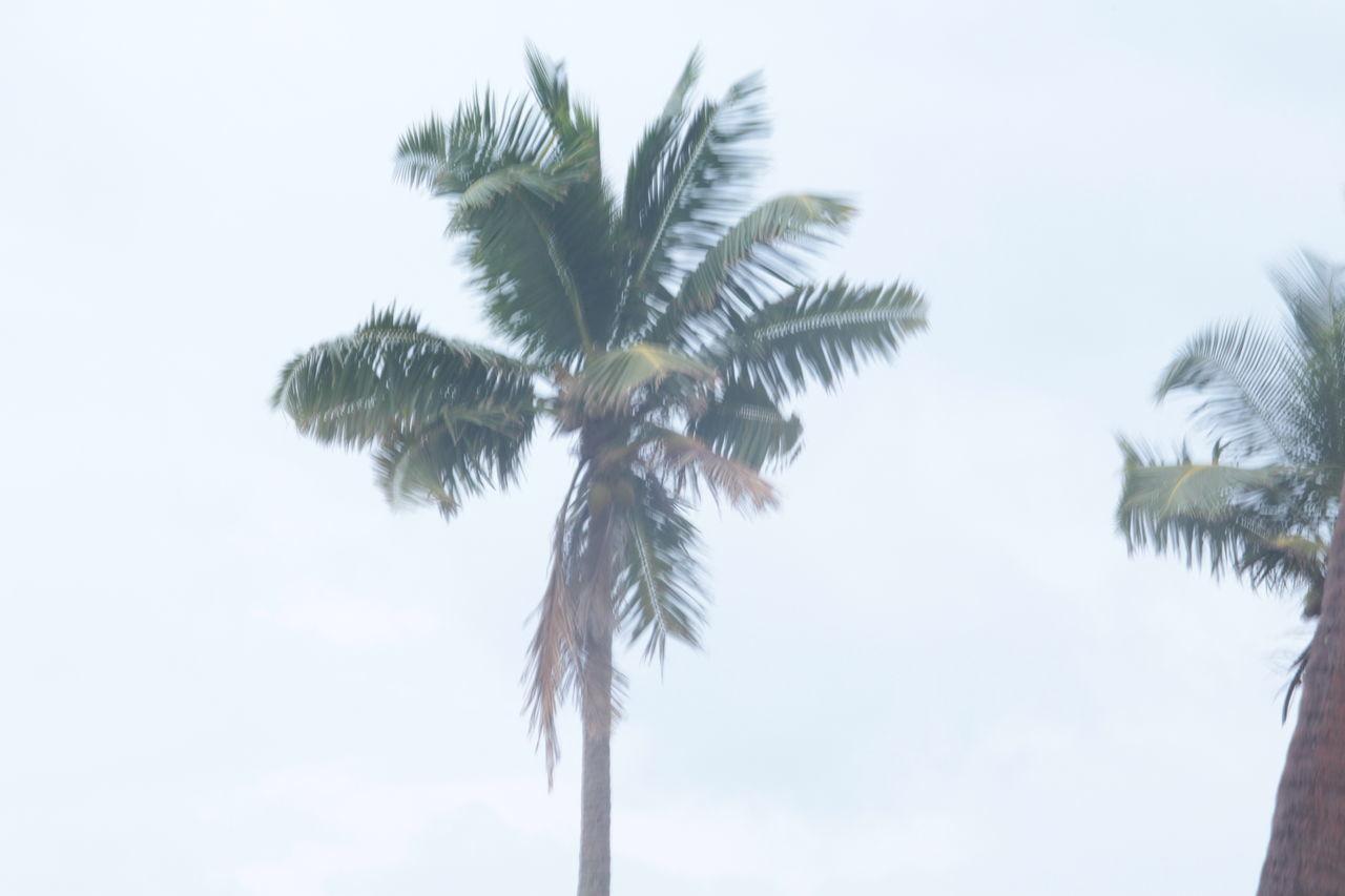 Mahatma Gandhi Marine National Park, Wandoor Islands, Port Blair, Junglighat Beach Photography Boatman Boats⛵️ Junglighat Mahatma Gandhi Marine National Park Marine Interpretation Centre Migratory Birds Model School, Port Blair Port Blair Round Rainbow Snake Island Sparrow Bird Swami Vivekananda Wandoor Wandoor Beach Wildflowers