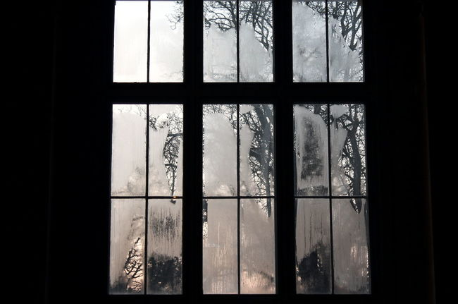 Blind Window Blind Windows Condensation Dark Evening Light Tree Window Window Frame Winter Light Still Life Twilight