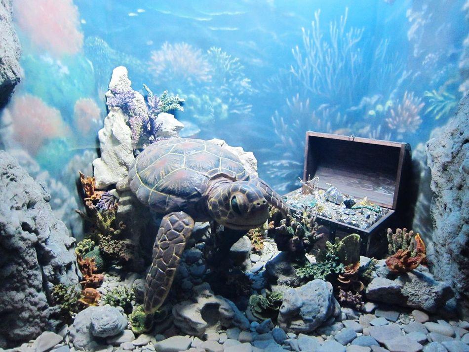 подводный мир 🐢🐬