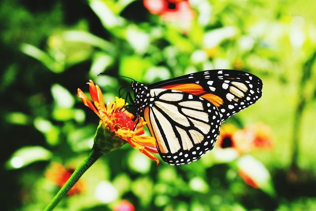 Butterfly ❤ Beauty In Nature