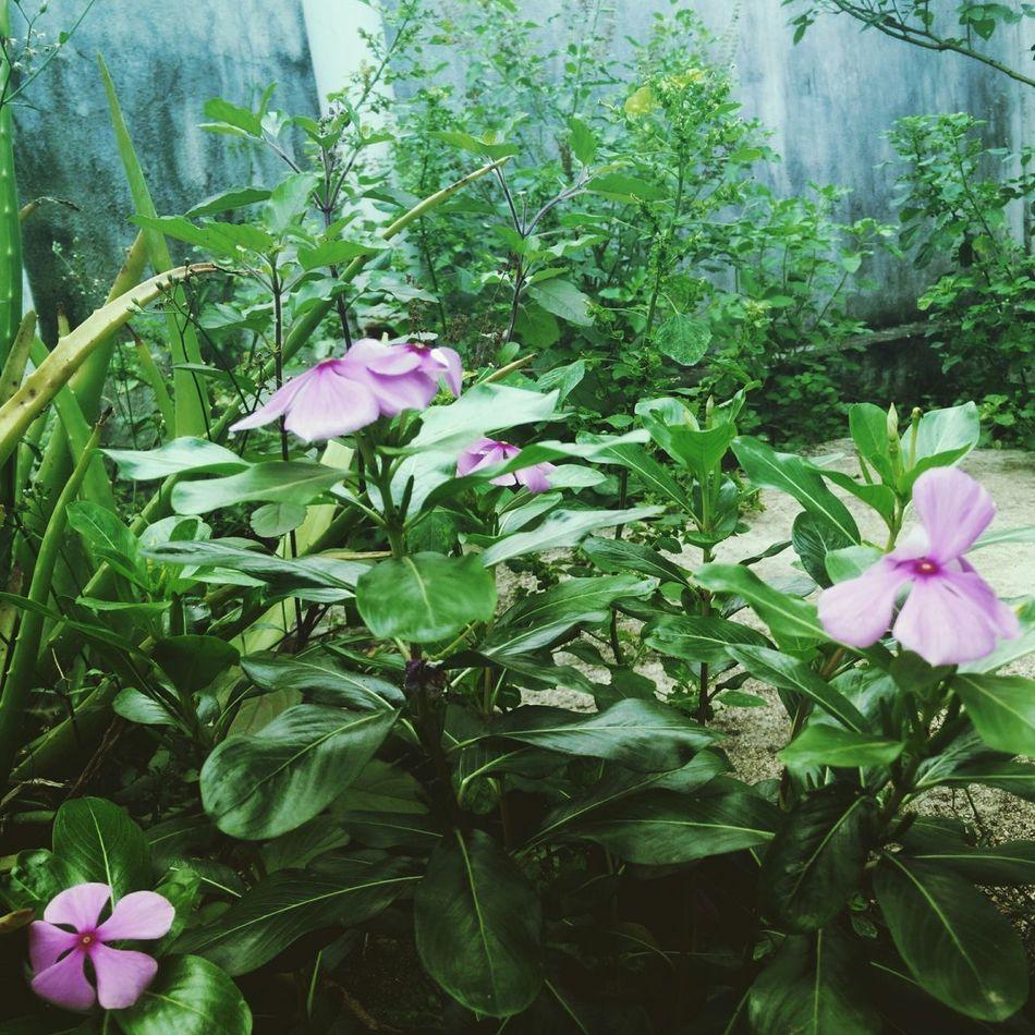 Flower garden!! Timepass Clicks Beauty Nature Flowerporn Earlymorn Chennai India Home