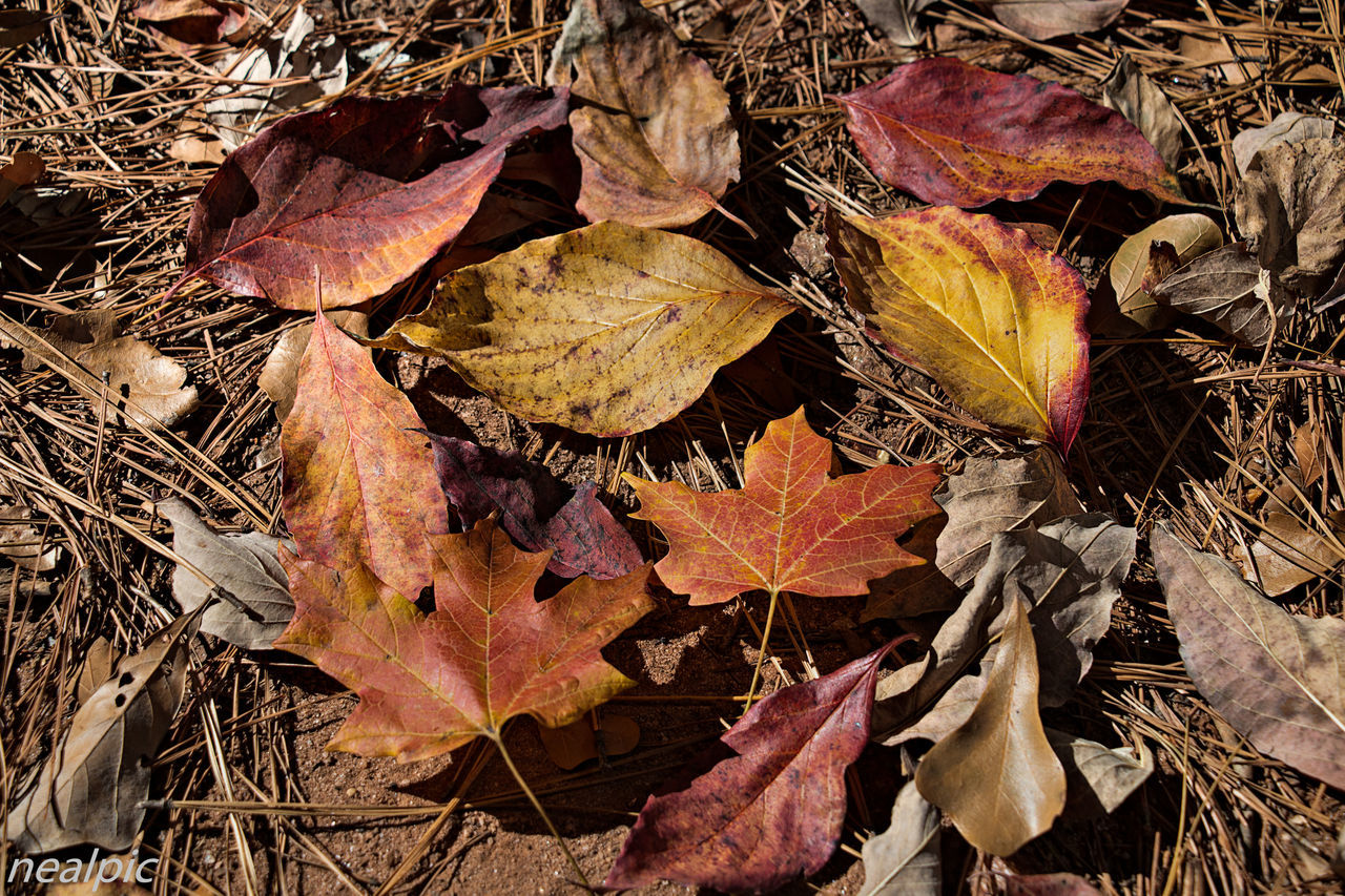 Autumn Backgrounds Beauty In Nature Change Close-up Day EyeEm Best Shots Fragility Full Frame Leaf Leaves Maple Leaf Nature No People Outdoors Tree