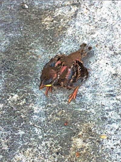 Under Pressure A Newly Born Bird Fallen Down From Nowhere Taking Photos