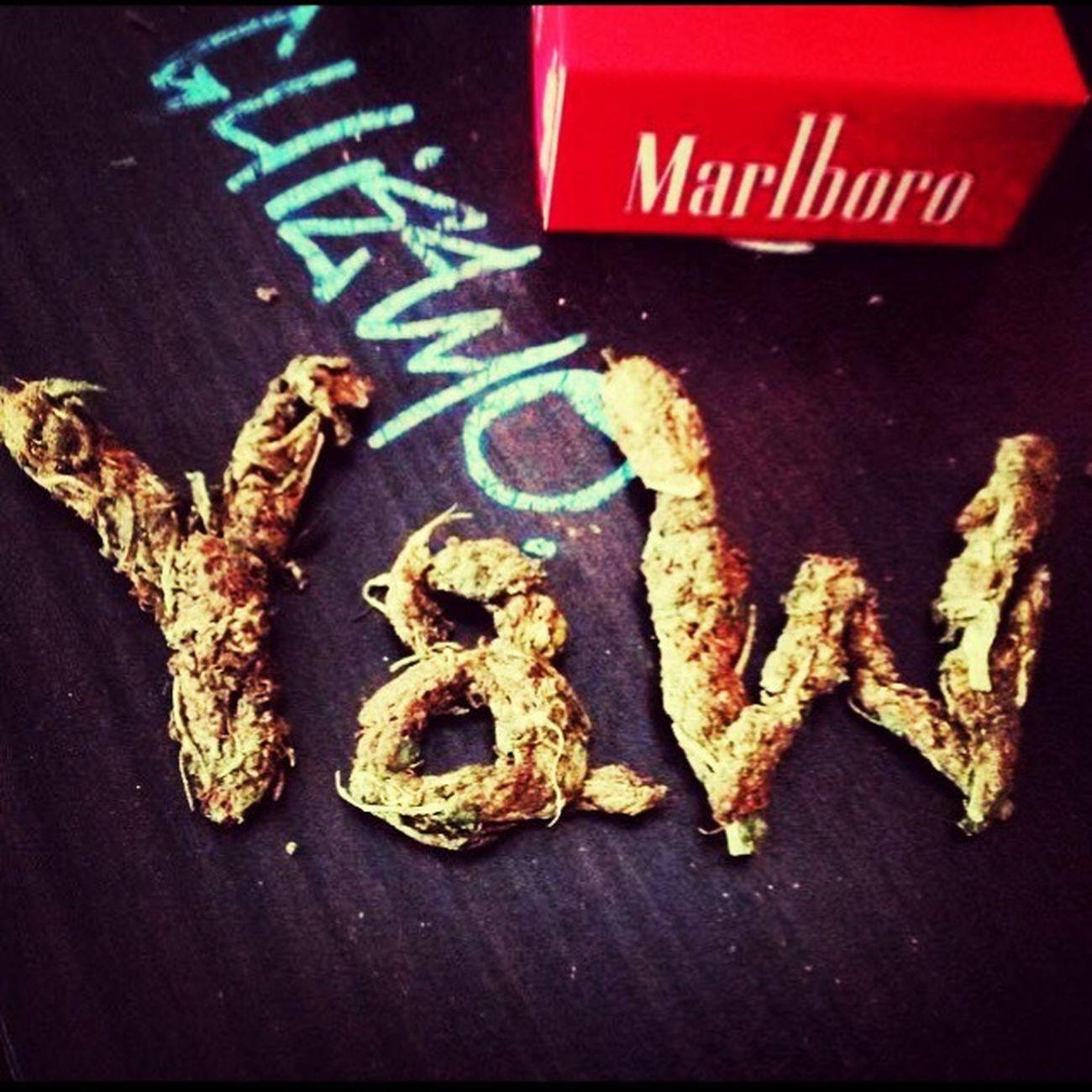 Guiziouzou Y&W Weed Time Mylove GangstaParadise 🌸✨💘