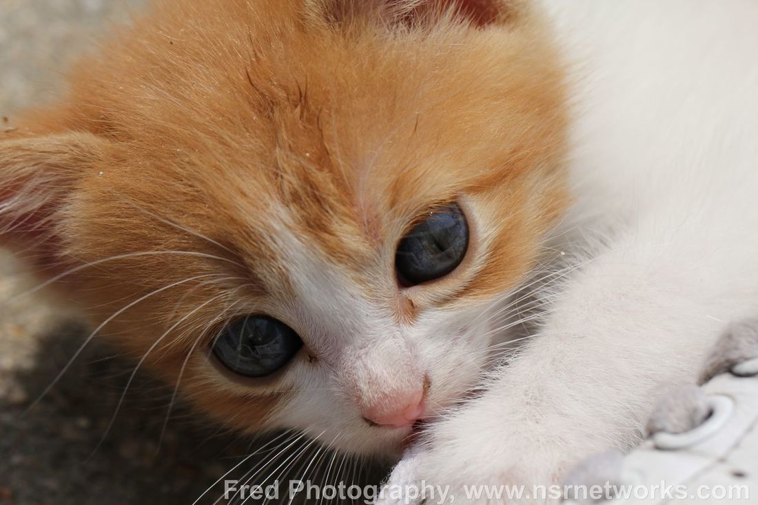 Cute Pets Cats Cat Lovers Chat
