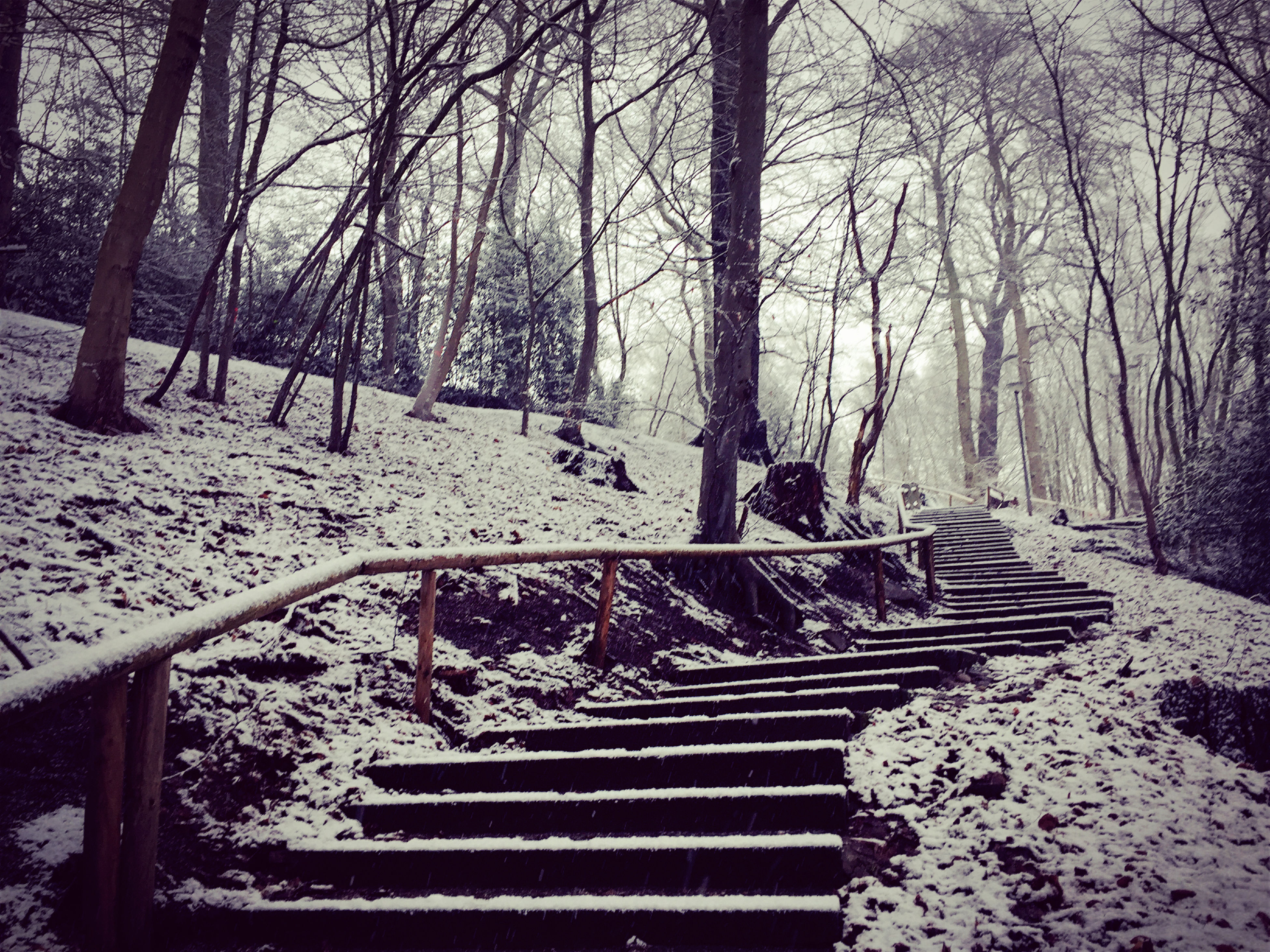 tree, snow, winter, season, cold temperature, bare tree, tranquility, nature, the way forward, railing, bench, tranquil scene, empty, branch, covering, steps, absence, weather, beauty in nature, scenics