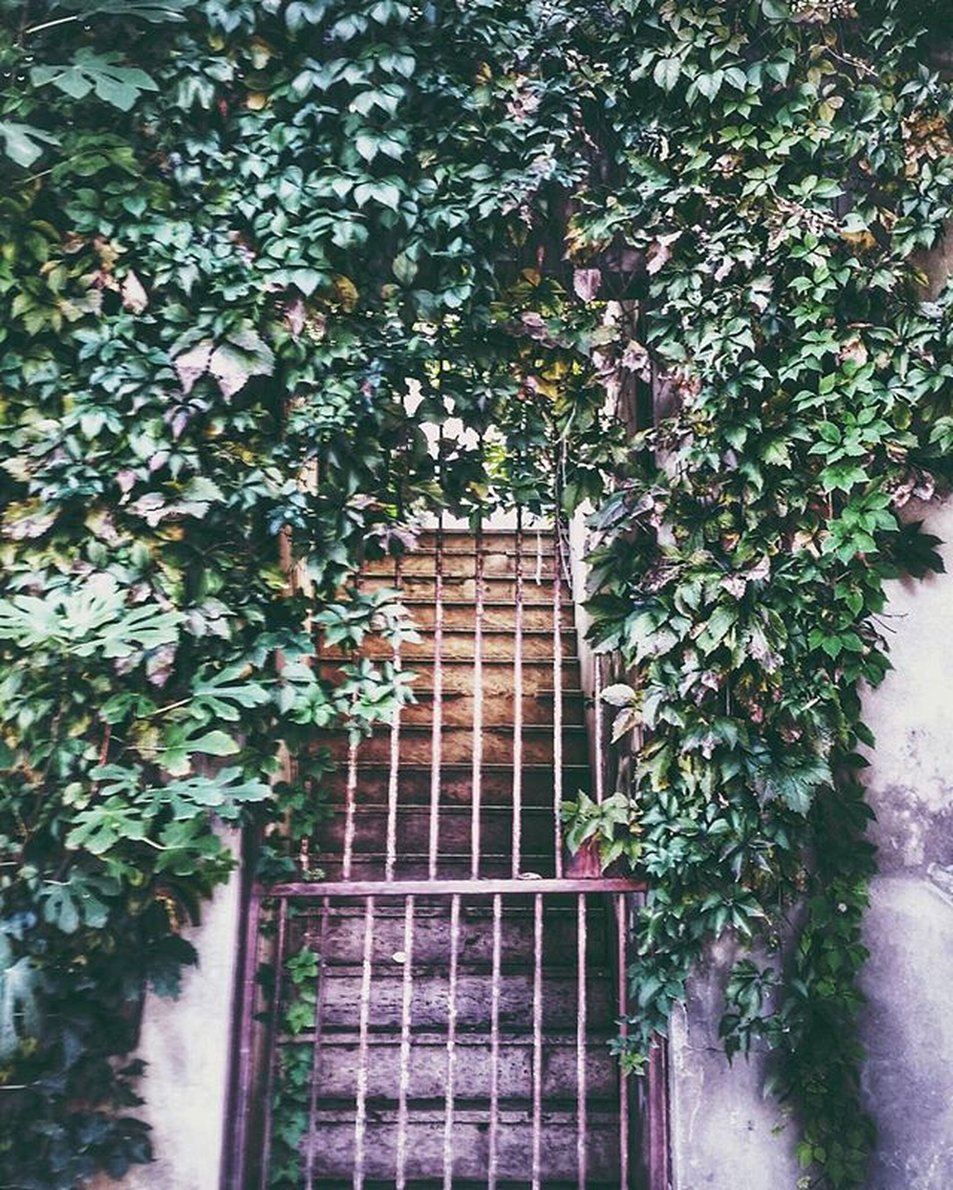 building exterior, architecture, built structure, growth, plant, window, tree, leaf, flower, potted plant, house, low angle view, ivy, building, branch, day, nature, residential structure, no people, green color