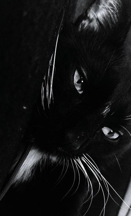 Cats Cat Lovers Cats Of EyeEm Mesquino Love ♥ 1yearsold Compans Caffarelli Crazy Crazycats Playground Catselfies Black Blackandwhite Trip Chilling First Eyeem Photo