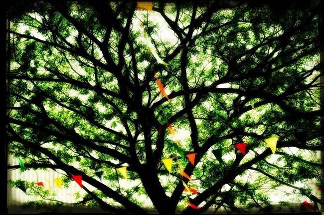 Family Tree...